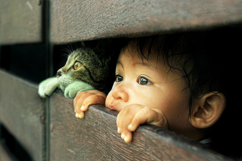 http---thehdwall.com-wp-content-uploads-2014-09-Cats-Face-Glance-Fence-Children-Animals-HD-Background