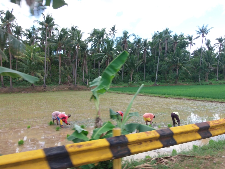 Magtanim ay di biro.(Planting rice is no joke)