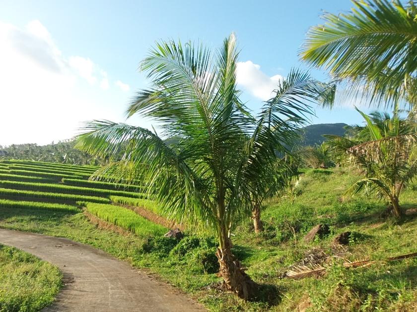 Iyusan Rice Terraces
