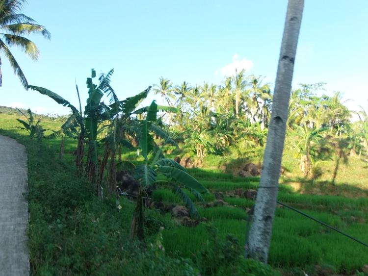 Path to Bagongbong Falls
