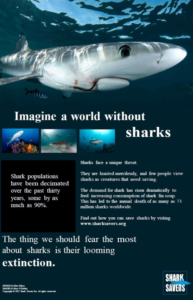 About Sharks