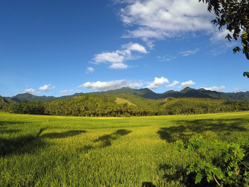 Green fields of Southern Leyte