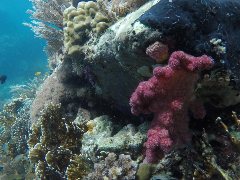 Beautiful Reefs of Napantao